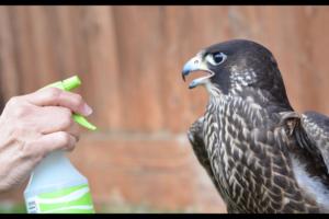 Pseudomonas and the Spray Bottles