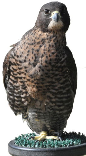 Clinical Avian Pathology Services