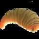 Parasites | Ectoparasites