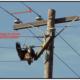 Electrocution in Raptors